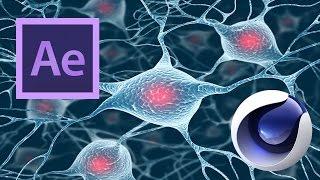 VideoFort | Adobe After Effects |